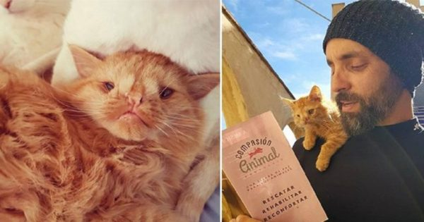 Αυτό το γατάκι ήταν «πολύ άσχημο» για να υιοθετηθεί, μέχρι που κάποιος μπόρεσε και είδε την ομορφιά μέσα του