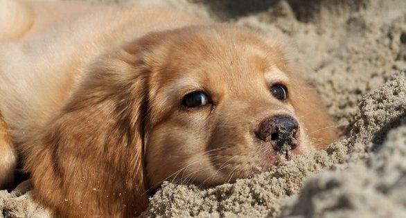 4 Οκτωβρίου – Παγκόσμια Ημέρα των Ζώων!