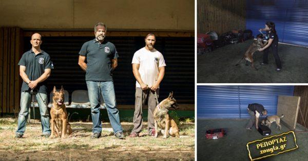 Οι τετράποδοι αστυνομικοί που μυρίζονται το έγκλημα