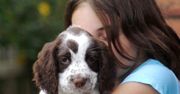 Πώς θα μπορούσαν τα σκυλιά να βοηθήσουν τα παιδιά να κατανοήσουν την έννοια του Bullying;