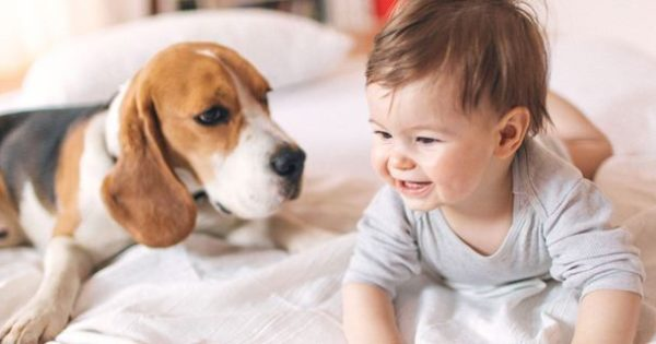 Τι κάνουμε όταν ο σκύλος μας ζηλέυει το νεογέννητο μωρό μας;