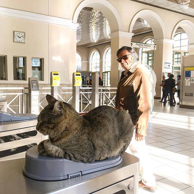 μοναστηράκι γάτες γάτα μοναστηράκι Γάτα