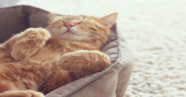 4 αστεία βίντεο με γάτες που θα σε κάνουν να ξεκαρδιστείς στα γέλια