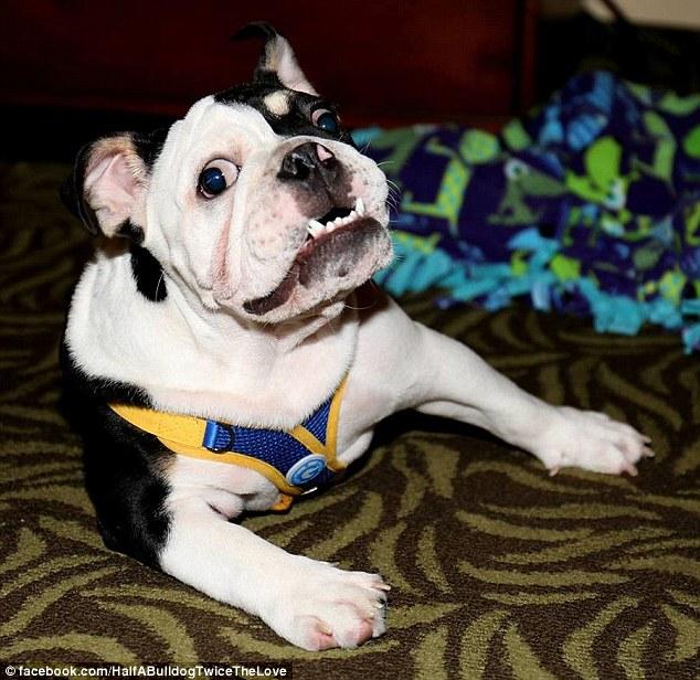 Σκύλος κινητικά προβλήματα