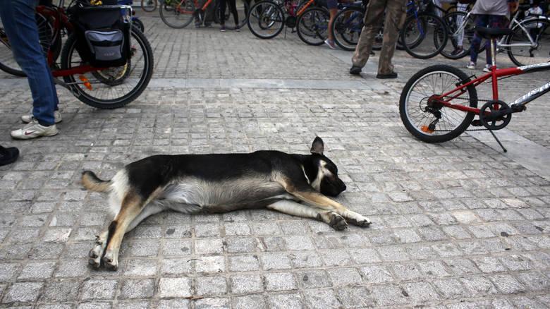 πυροβόλησε σκύλο