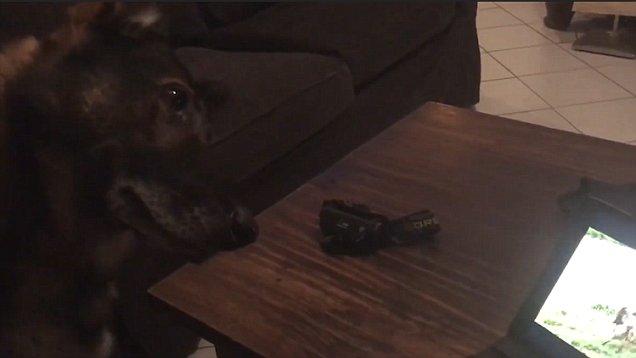 σκύλος κ9 Βίντεο
