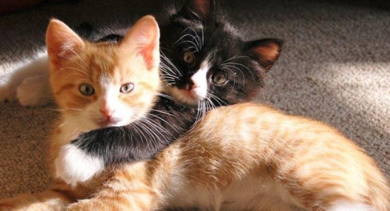 γάτες βίντεο γάτες video γάτες vid αστείες γάτες