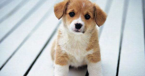 Θέλω σκύλο! Πόσοι από εμάς δεν το σκέφτηκαν κάποια στιγμή;