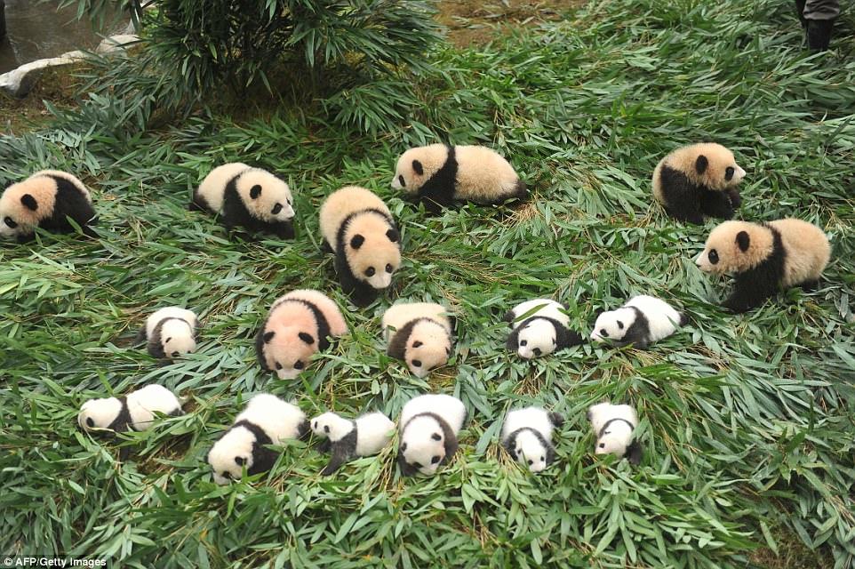 πάντα μωρά πάντα Κίνα