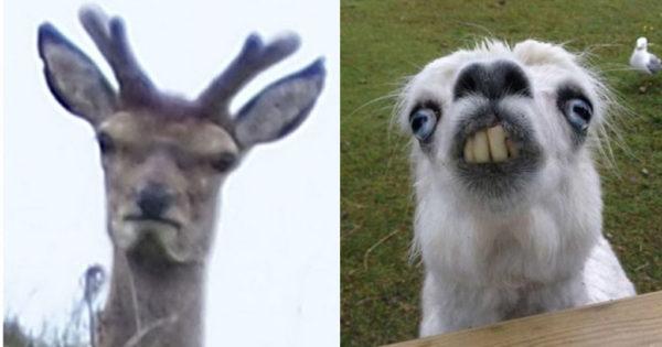 40 καθόλου φωτογενή ζώα που θα σας κάνουν να γελάσετε νιώθοντας τύψεις