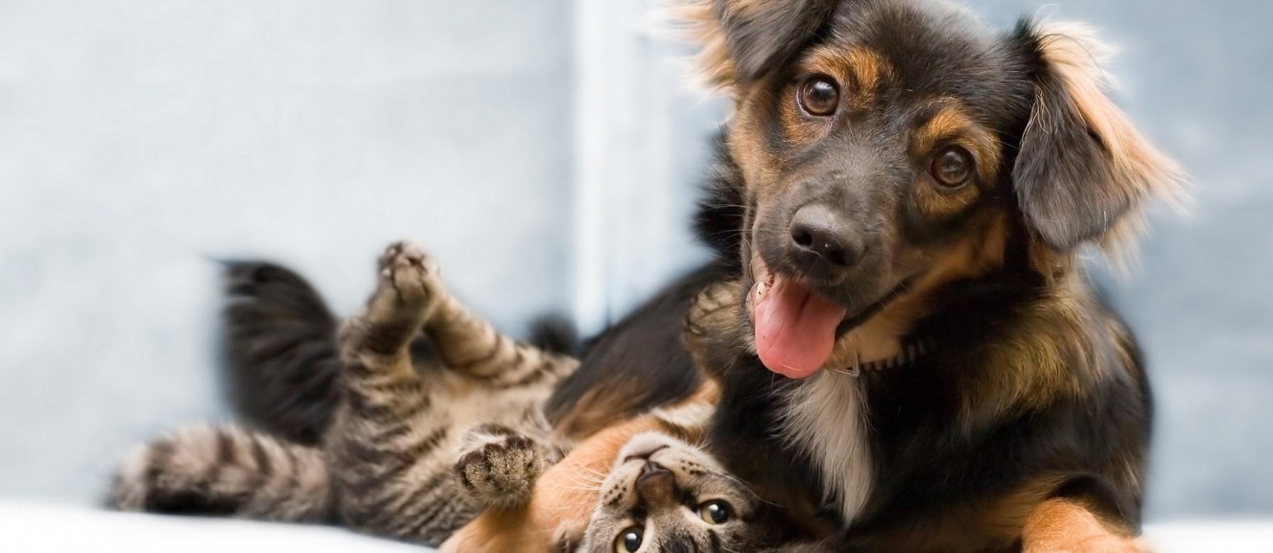 Παγκόσμια Ημέρα των Ζώων Παγκόσμια Ημέρα Ζώων