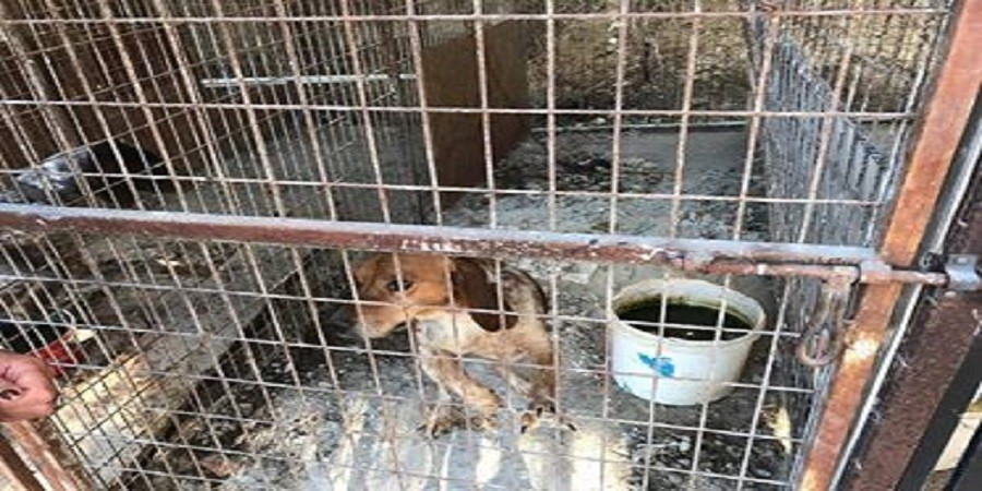 Dead_dog_in_cage_Oct_2017_Kaili_Paphos_live_in_cage_(1)