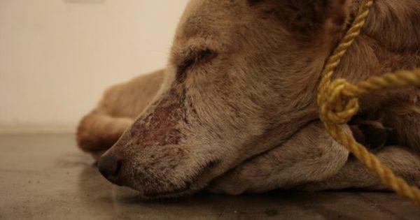 Πρόστιμο 270.000 ευρώ για θανάτωση και κακοποίηση σκύλων στη Λάρισα