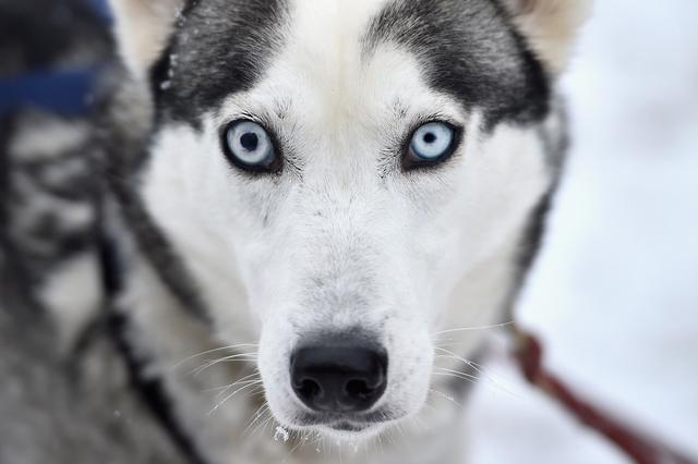 σκύλος βλέμμα σκύλοι βλέμμα σκύλου