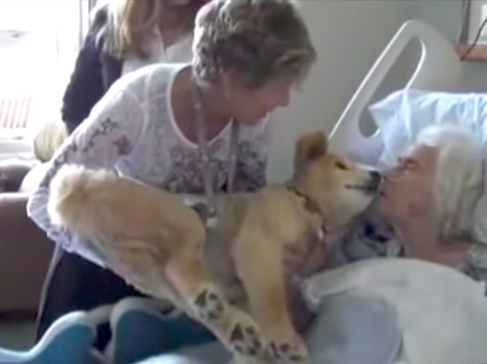 σκύλος θεραπείας σκύλος ετοιμοθάνατη