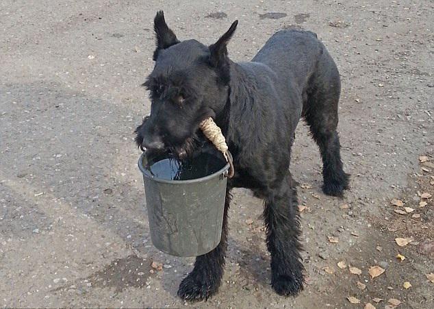 χωράφι Σκύλος αγρότης