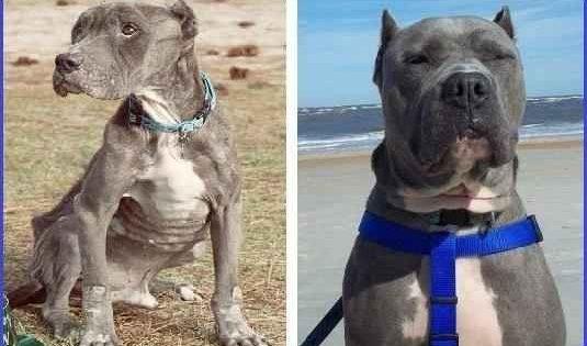11 pitbull που σώθηκαν από τον θάνατο (προσοχή σκληρές εικόνες)