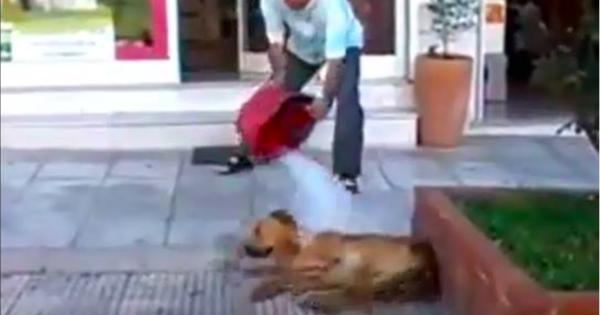 Η περιπέτεια του ανθρώπου που δημοσιοποίησε το μπουγέλωμα σκύλου από φαρμακοποιό στη Θεσσαλονίκη