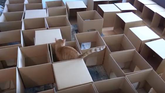 λαβύρινθος για γάτες λαβύρινθος γάτες