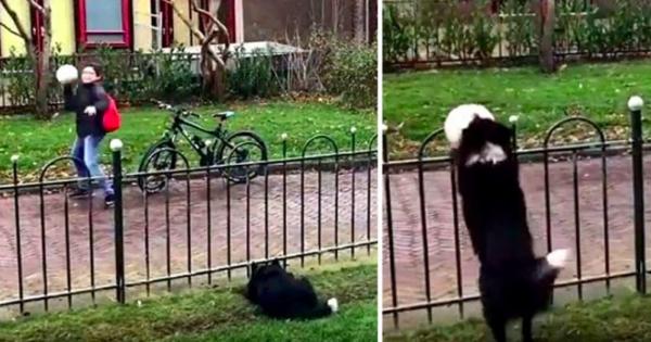 Αξιολάτρευτος σκύλος «στήνει» παιχνίδια με τους περαστικούς