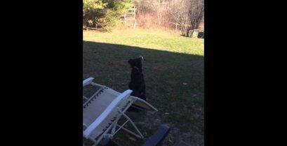 Ο σκύλος μπέρδεψε το φεγγάρι με ένα μπαλάκι