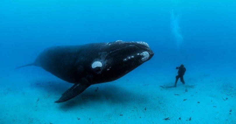 Φωτογραφίες από τα βάθη των ωκεανών σε κάνουν να συνειδητοποιήσεις πόσο μικροί είμαστε