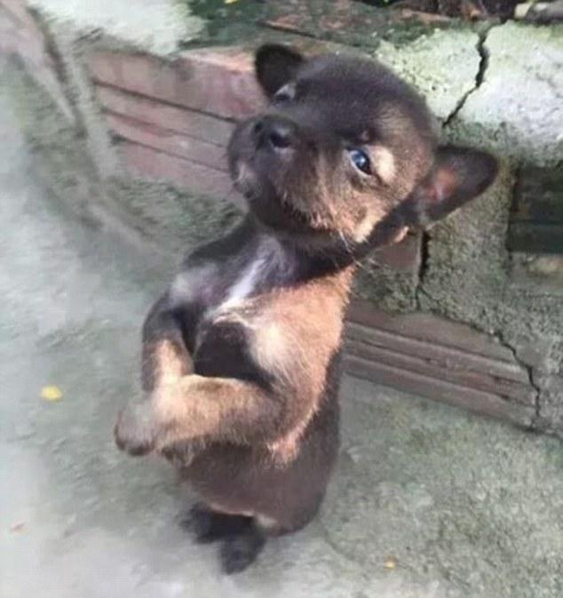 Σκύλος Αδέσποτος σκύλος Αδέσποτα