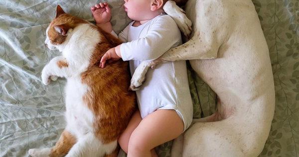 Kακοποιημένη σκυλίτσα έτρεμε τους πάντες μέχρι που συνάντησε αυτό το μωρό