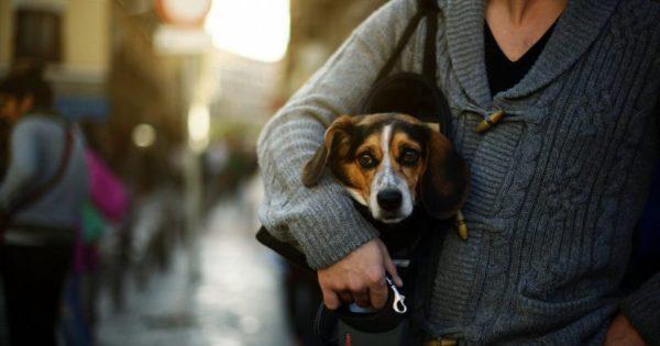 Επιτρέπεται να μην αγαπάς τα ζώα, απαγορεύεται να τα σκοτώνεις