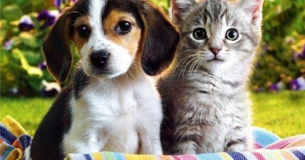 Ηράκλειο: Ξεκινούν τη Δευτέρα οι εκδηλώσεις ευαισθητοποίησης για τα ζώα συντροφιάς