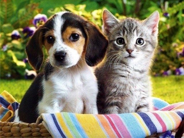 Ηράκλειο: Ξεκινούν τη Δευτέρα οι εκδηλώσεις ευαισθητοποίησης για τα ζώα συντροφιάς ζώα συντροφιάς ζώα ευαισθητοποίηση για τα ζώα εκδηλώσεις ευαισθητοποίησης