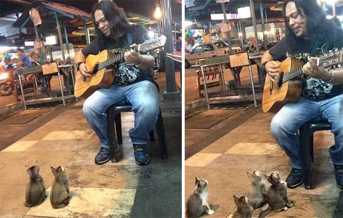 μουσικός του δρόμου γατάκια