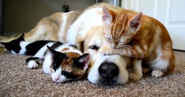 Αυτές οι 5 ράτσες σκύλων μπορούν να συνυπάρξουν εύκολα με γάτες