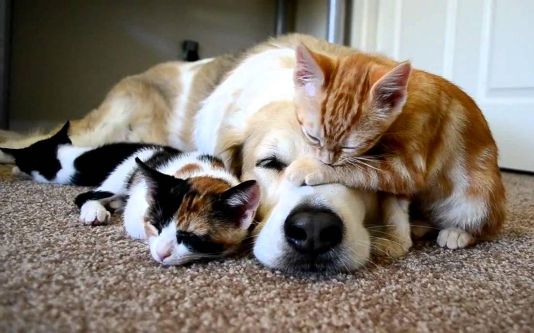 σκύλος και γάτα Σκύλος ράτσες σκύλων Γάτα