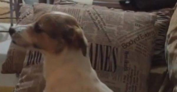 Σκύλος βλέπει ταινία τρόμου κι η αντίδραση του δεν διαφέρει καθόλου από αυτή του ανθρώπου