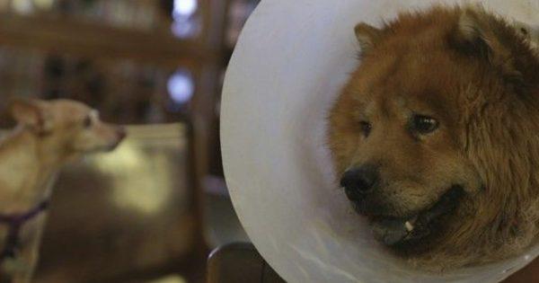 Αυτό είναι αγάπη: Πήρε άδεια άνευ αποδοχών για να φροντίσει τον άρρωστο σκύλο της