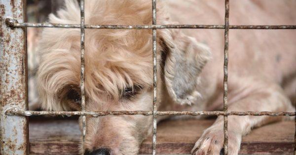 Η Καλιφόρνια γίνεται η πρώτη πολιτεία των ΗΠΑ όπου τα pet shop θα πουλάνε μόνο ζώα από καταφύγια
