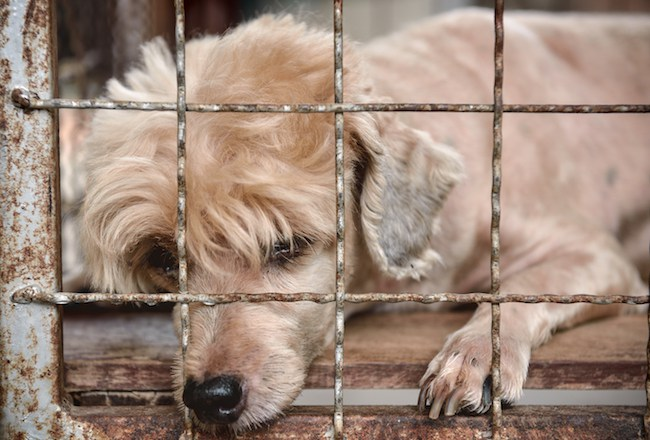 lonely old dog in cage photo .
