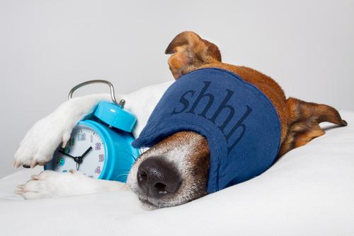 Σκύλος Να γιατί πρέπει να «ρωτάς» τον σκύλο σου κάθε πρωί αν κοιμήθηκε καλά κοιμήθηκε καλά ο σκύλος