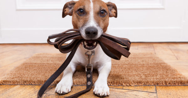 Βόλτα με το σκύλο: Τι πρέπει να προσέχεις;