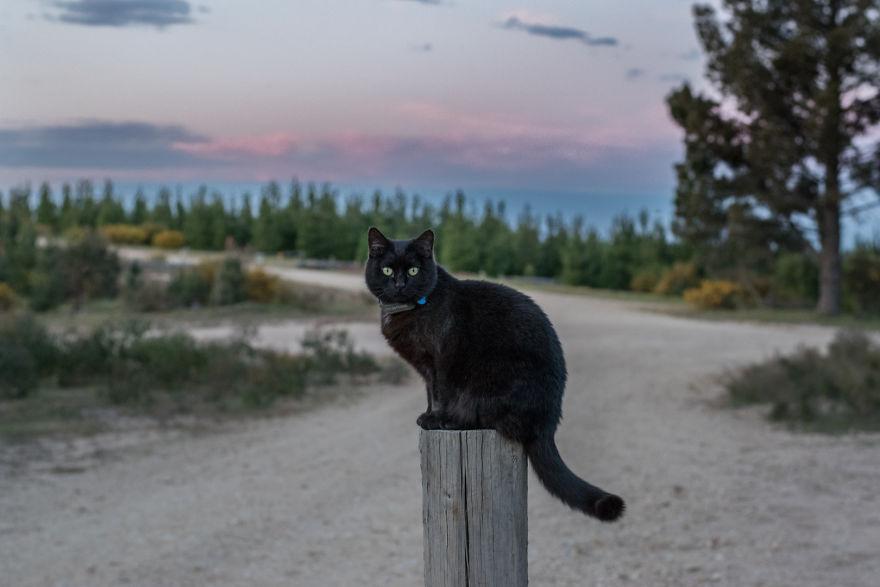 Γάτα αδέσποτη γάτα