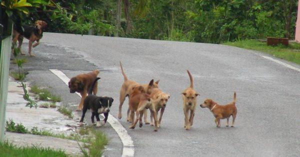 Στειρώσεις σε αδέσποτα ζώα της Ρόδου