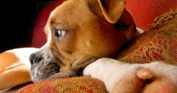 Η γαστρίτιδα του σκύλου (Συμπτώματα – Διάγνωση – Θεραπεία)