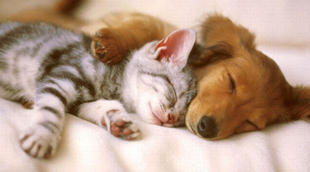 Σκύλος σκυλιά ερωτεύονται τα σκυλιά