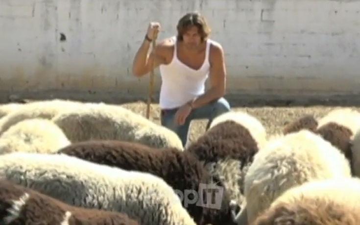 σπαλιάρας πρόβατα σπαλιάρας βίντεο πρόβατα σπαλιάρας βίντεο σπαλιάρας πρόβατα