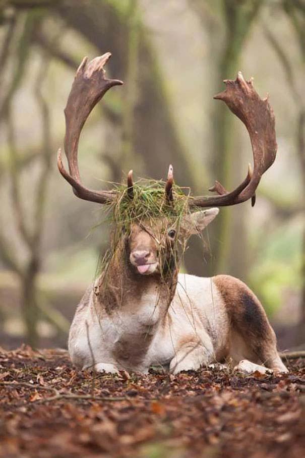 φωτογραφίες ζώα