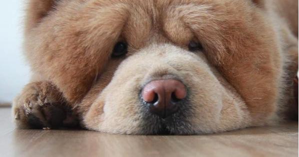 Σκύλος ή αρκούδα; Βρες τις διαφορές!