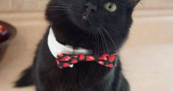 Ένα γατάκι που βρέθηκε εντελώς παράλυτο, έκανε την έκπληξη…