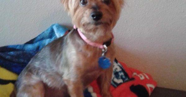 «Ράγισε» η καρδιά της όταν πέθανε η σκυλίτσα της – Μεταφέρθηκε στο νοσοκομείο με συμπτώματα εμφράγματος