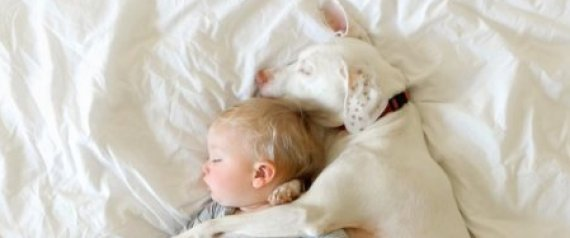 κακοποίηση κακοποιημένος σκύλος κακοποιημένος